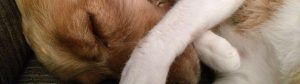 Oleje roślinne w diecie psa i kota