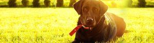 Zdrowe tłuszcze w diecie psa